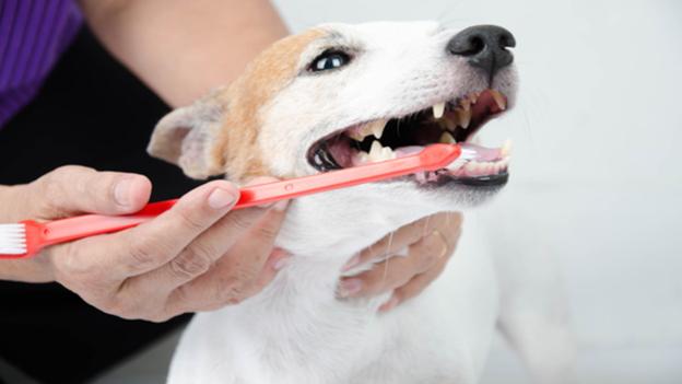 dog dental hygiene tips from riverside animal hospital in kelso washington